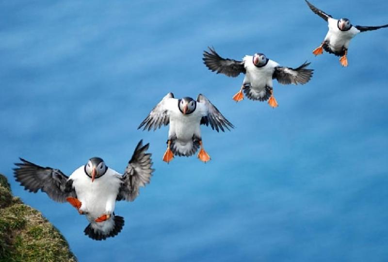 Внимание: сейчас вылетит птичка! животные, забавно, подборка, прикол, птицы, юмор