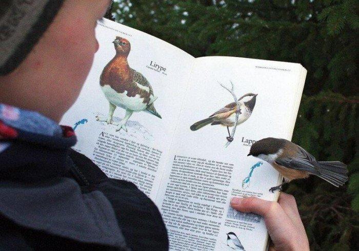 Птичья википедия животные, забавно, подборка, прикол, птицы, юмор