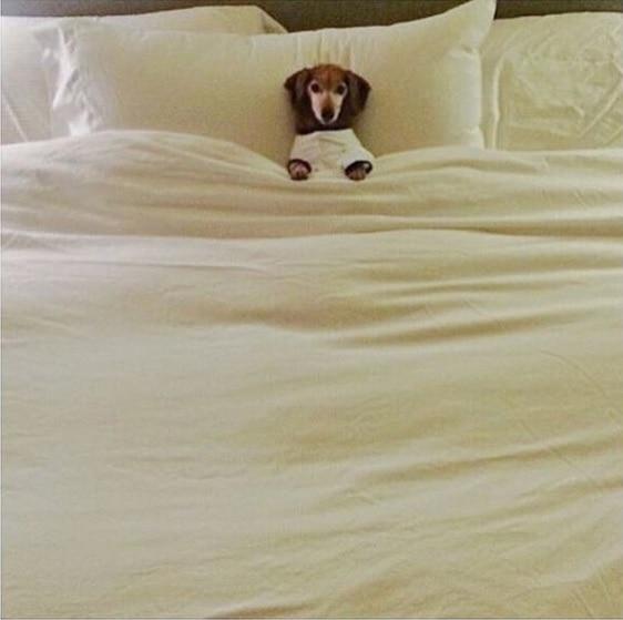 Завтрак в постель животные, забавно, милота, подборка, собака, умора, юмор