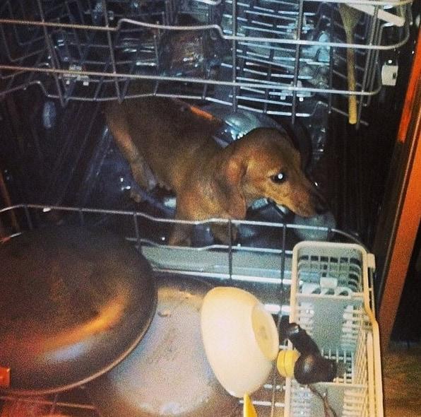 Пора помыться животные, забавно, милота, подборка, собака, умора, юмор