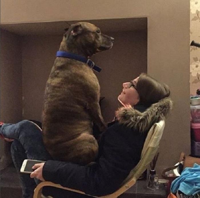 На своем троне животные, забавно, милота, подборка, собака, умора, юмор