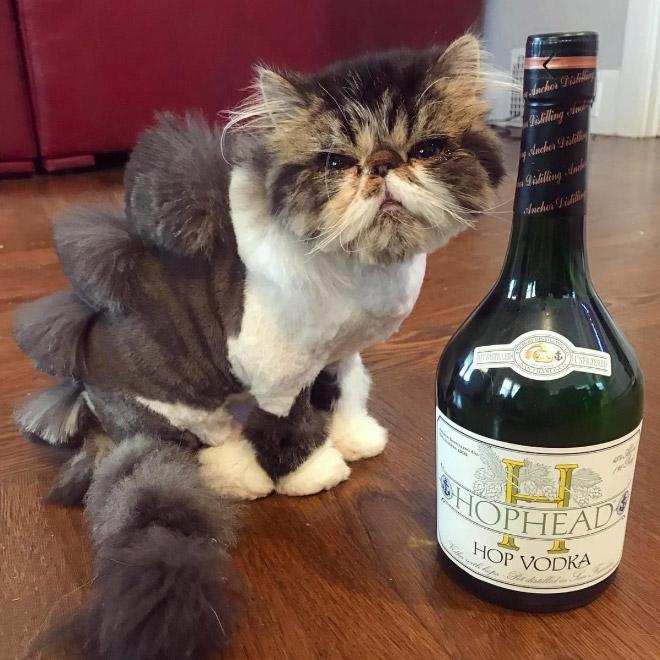 Кошачьи слабости животные, кот, кошка, месть, прикол, смех, хулиган, юмор