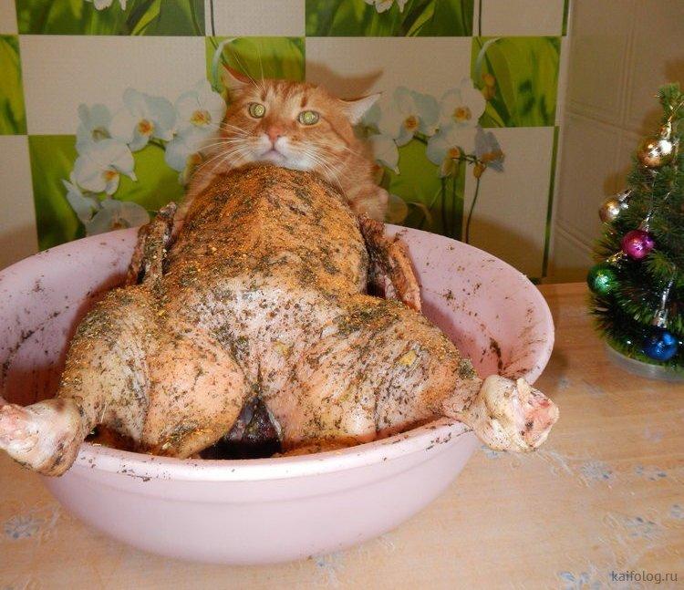 Ты ничего не видел! животные, кот, кошка, месть, прикол, смех, хулиган, юмор