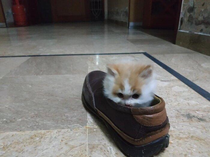 Классика жанра животные, кот, кошка, месть, прикол, смех, хулиган, юмор