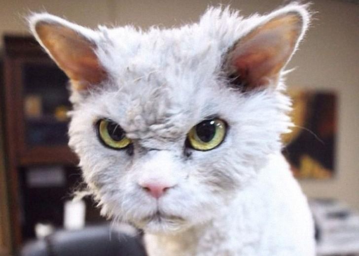 Не зли меня, человек! животные, кот, кошка, месть, прикол, смех, хулиган, юмор
