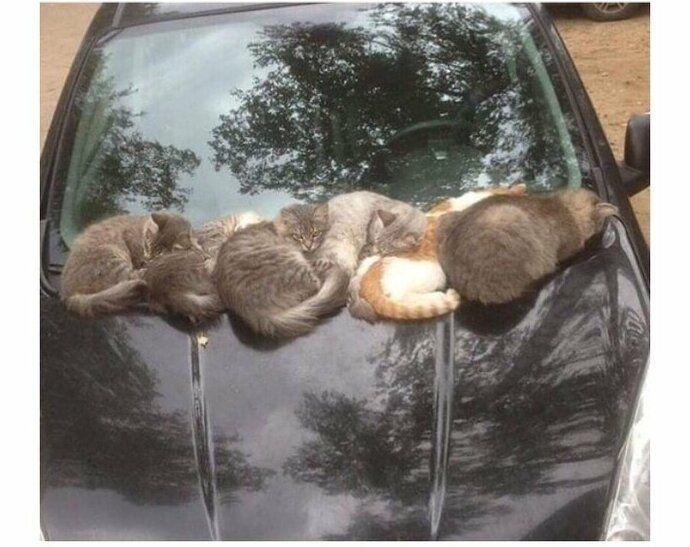 Месть водителю животные, кот, кошка, месть, прикол, смех, хулиган, юмор