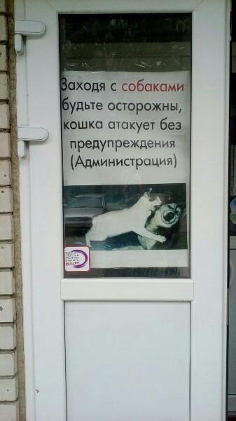 Бедные собаки животные, кот, кошка, месть, прикол, смех, хулиган, юмор