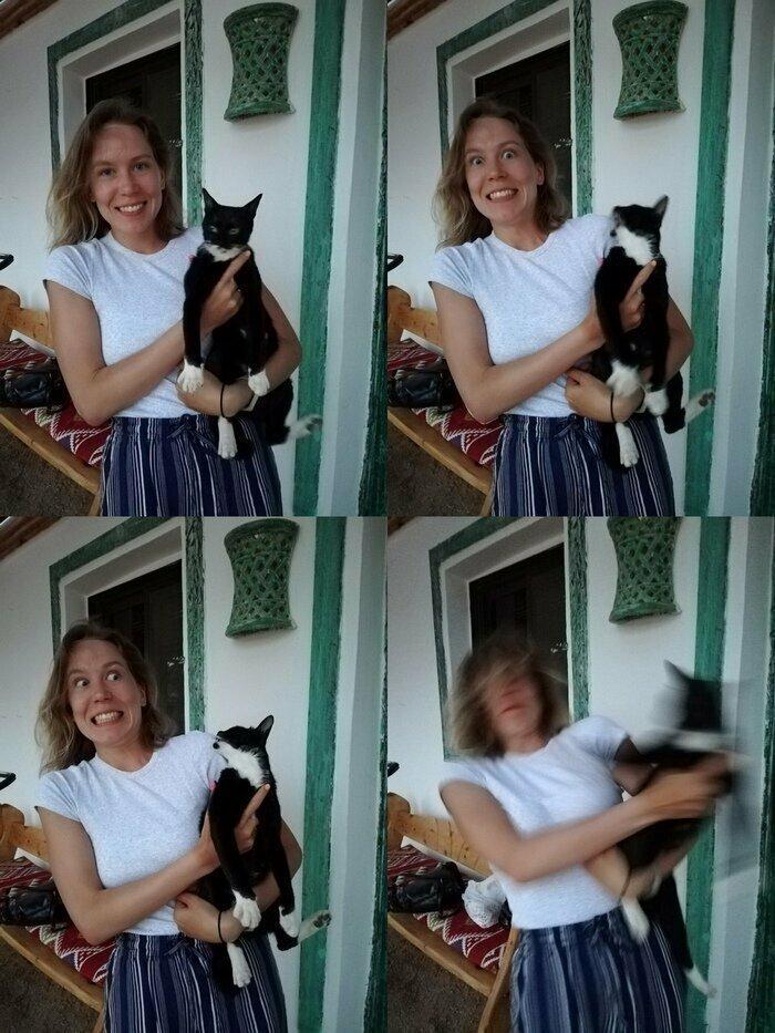 Ничто не предвещало животные, кот, кошка, месть, прикол, смех, хулиган, юмор