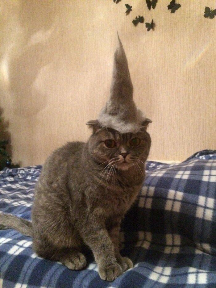 Ты нарвался, человечек! животные, кот, кошка, месть, прикол, смех, хулиган, юмор