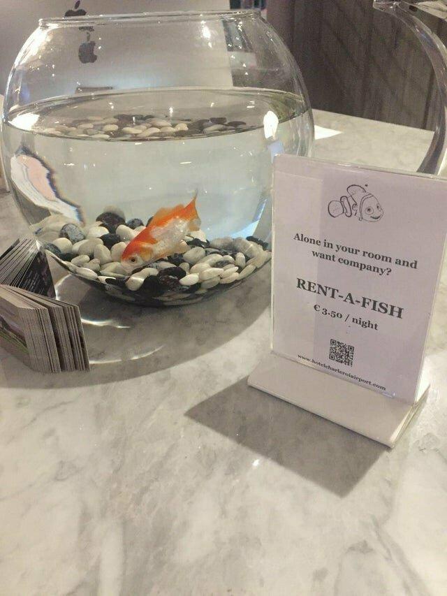 Этот европейский отель предлагает напрокат рыбку для тех путешественников, кто чувствует себя одиноко reddit, интересно, отель, сервис, фото, хостел
