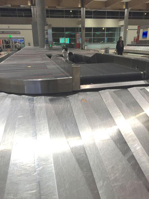 Где мой багаж? аэропорт, культура, люди, пассажир, полет, фото, чудаки, юмор