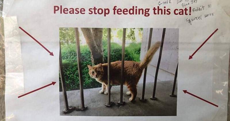 Студенты попытались защитить дворового кота от перекармливания остроумными графиками