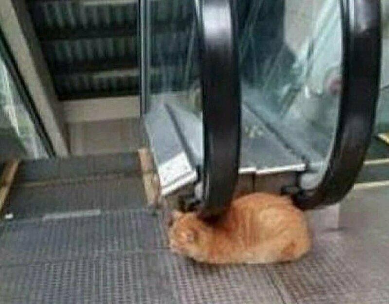 И котик gif, лестница, лестницы, подборка, прикол, эскалаторы