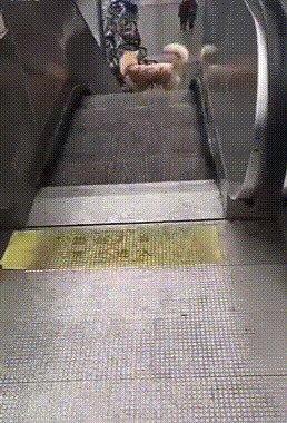 Развлечение нашла себе собачка