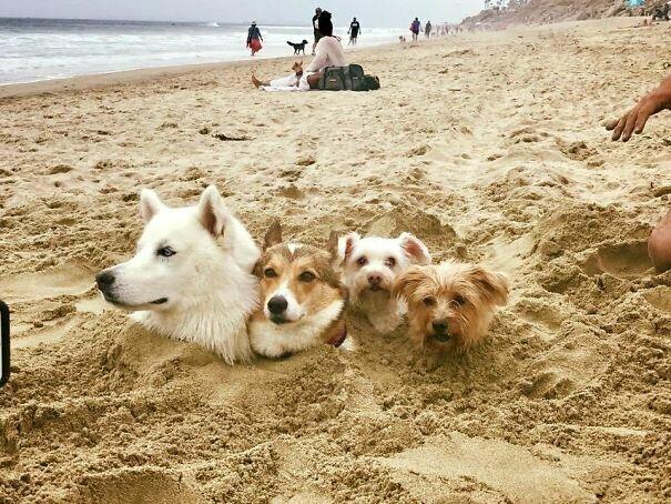 Песчаные псы вот это да, забавно, находки, неожиданности, пляжи, смешно, странные вещи, удивительное рядом