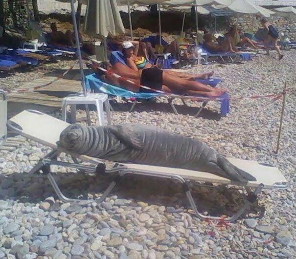 Ее зовут Арджило. и местные жители держат для нее на пляже специальный лежак