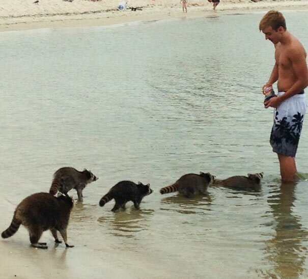 Группа в полосатых купальниках вот это да, забавно, находки, неожиданности, пляжи, смешно, странные вещи, удивительное рядом