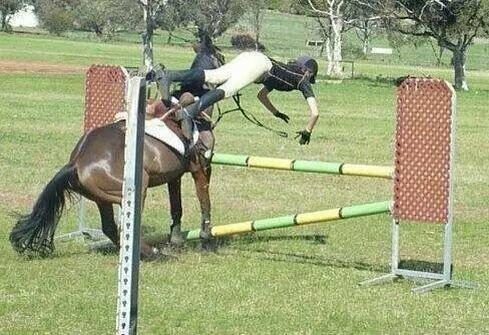 Коню просто надоело прыгать самому неприятность, неудача, пауки, понедельник, происшествие, смех да и только, юмор