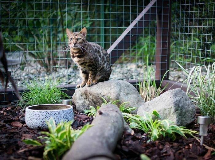 Дорого-богато, или как должны выглядеть вольеры для кошек