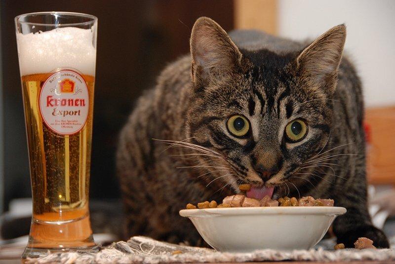 Пятничный вечер корм, кошачий корм, подборка, прикол, собачий корм, юмор