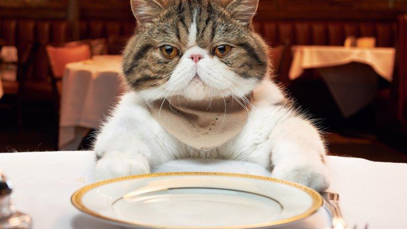 Среди собак и кошек тоже попадаются гурманы корм, кошачий корм, подборка, прикол, собачий корм, юмор