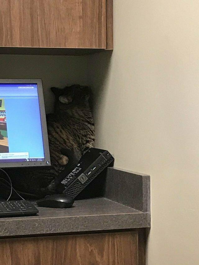 """""""Спросил жену, как кот перенес поход к ветеринару. Она прислала мне это"""""""