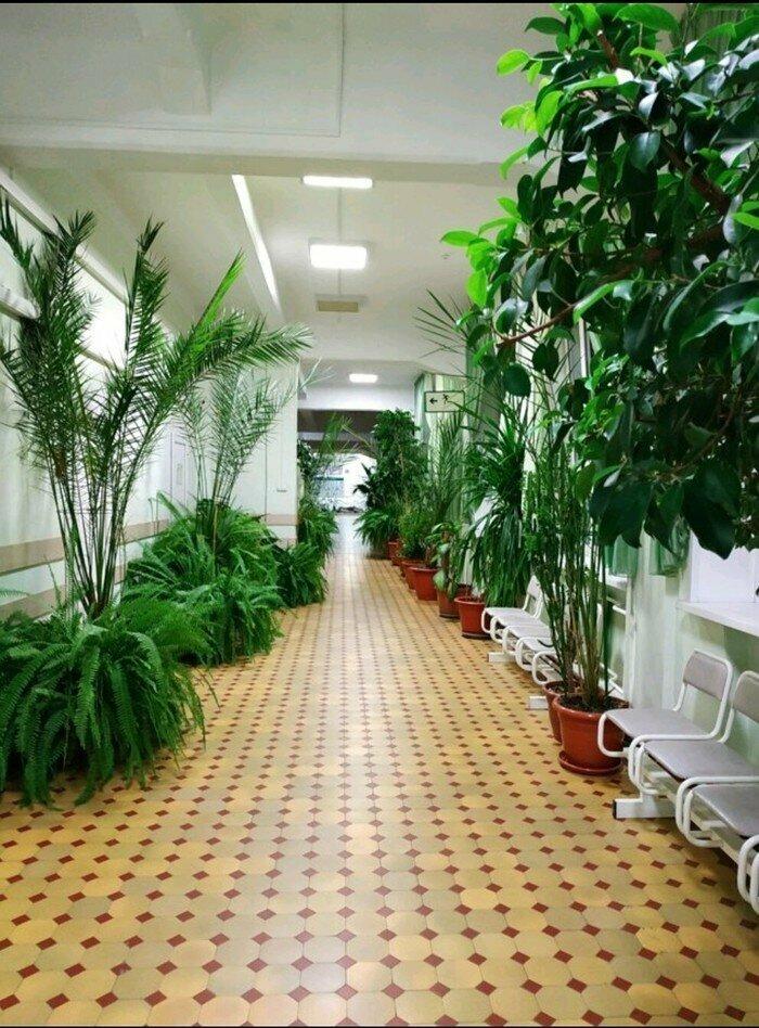 Дендрарий в одной из поликлиник Новосибирска