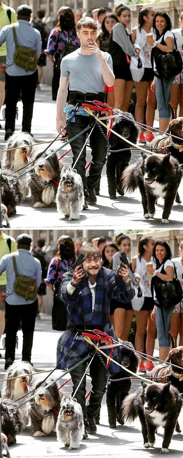 Дэниел Рэдклифф выгуливает собак