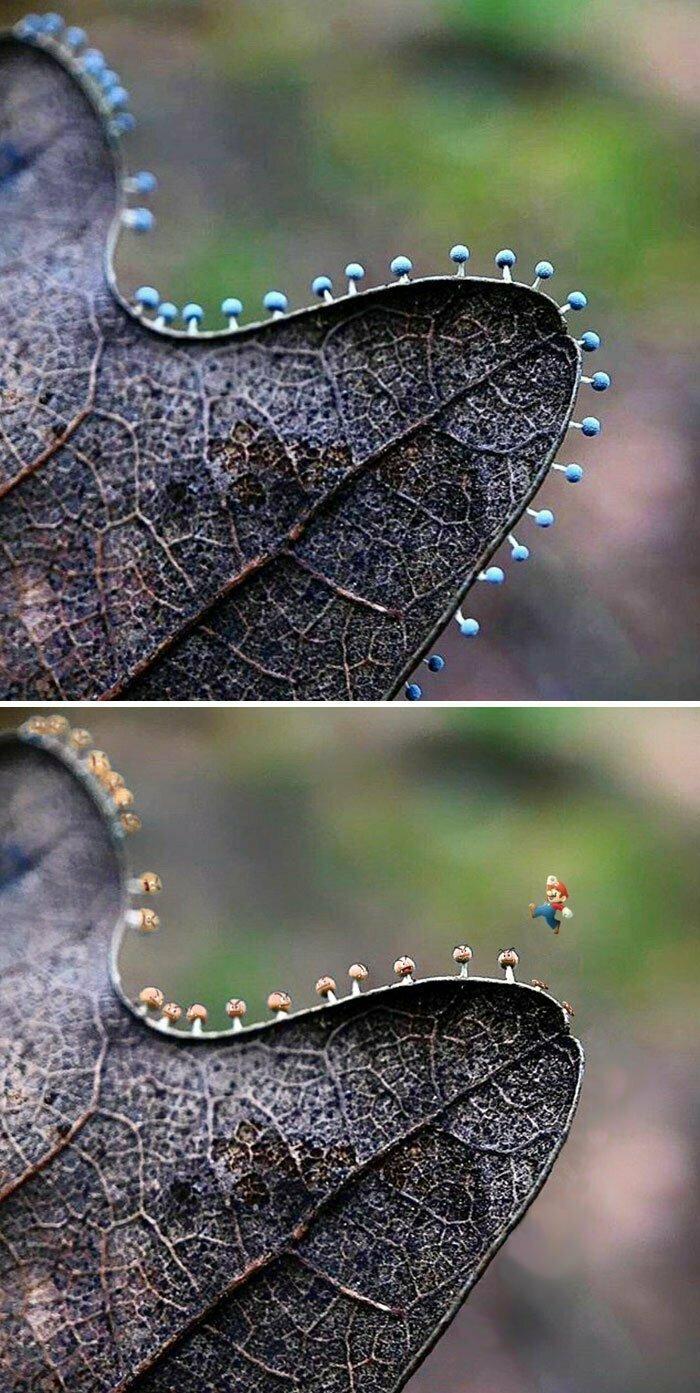 Микрогрибы на листке