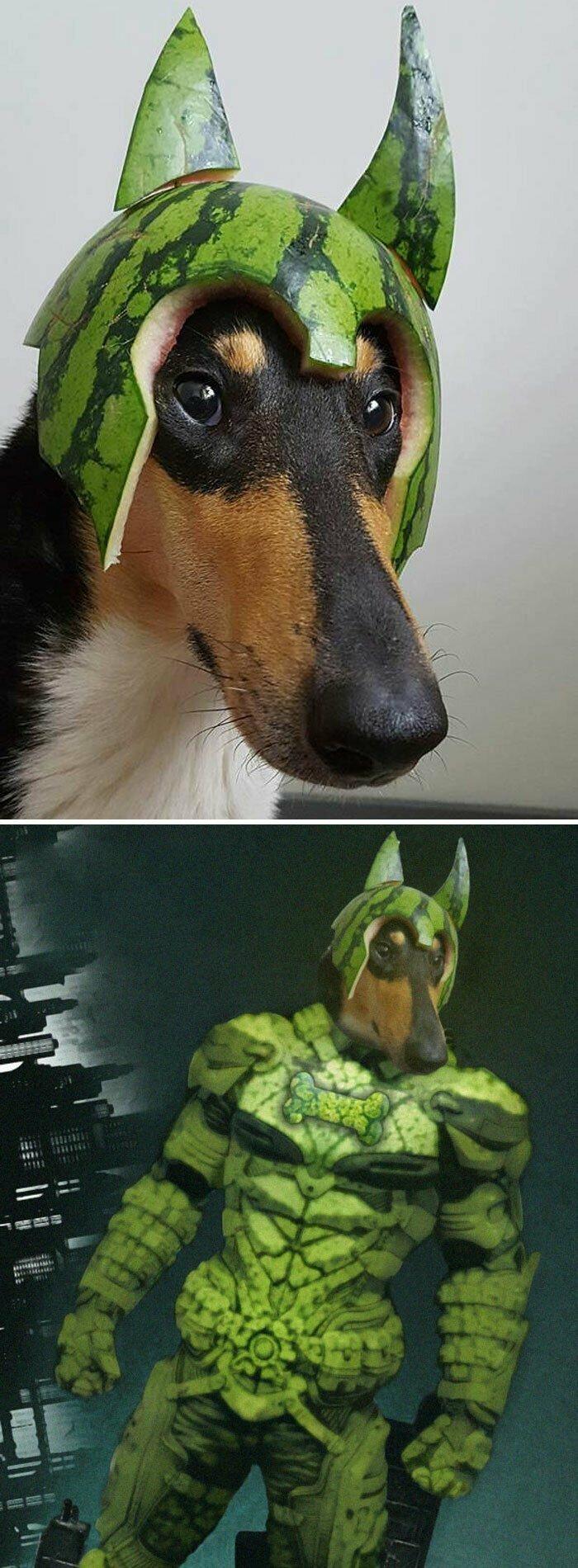 Собака в арбузном шлеме