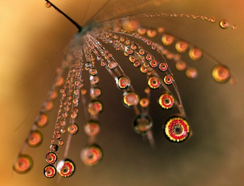 Макросъемка и преломление света в каплях воды вода, капли, красота, макросъемка, макрофото, преломление света, фото, фотография
