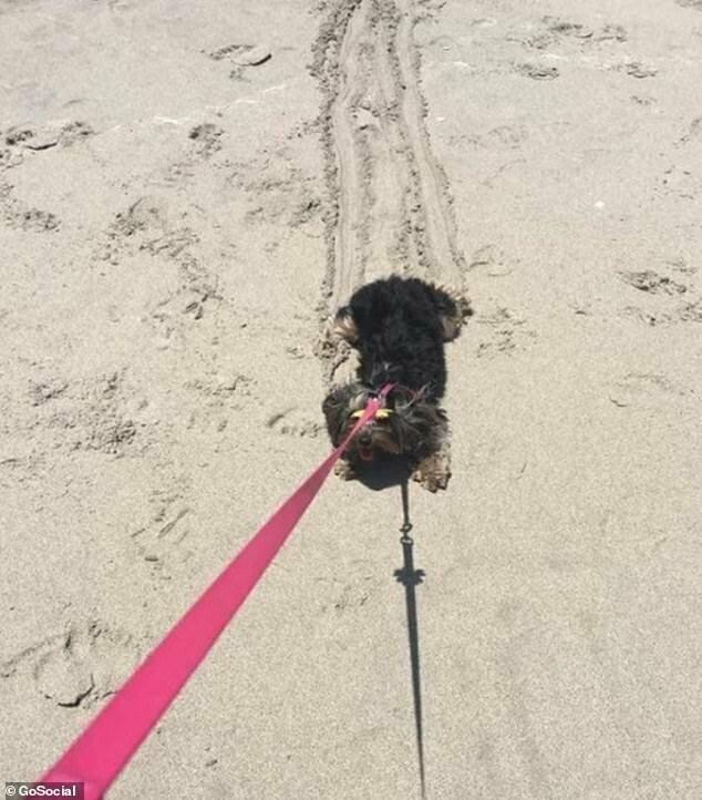 Не в восторге: первый поход на пляж