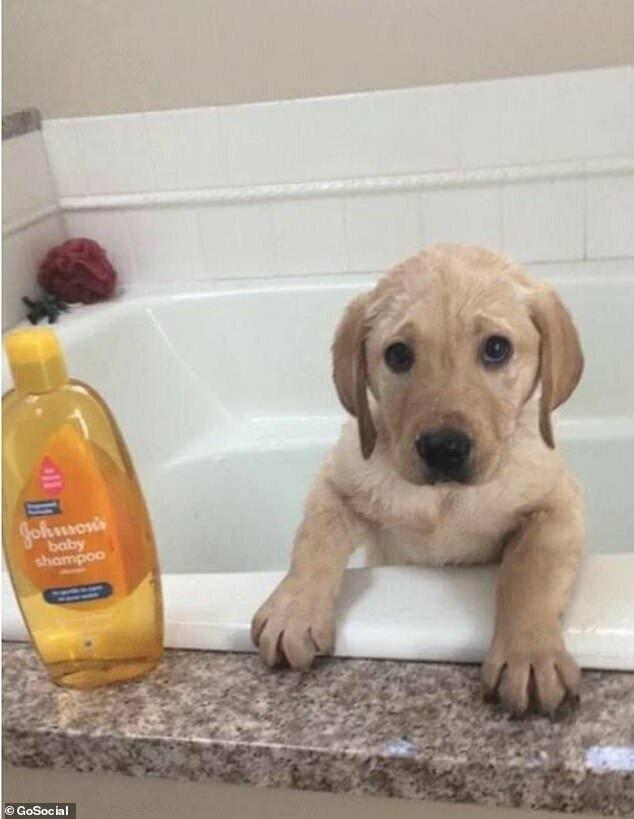 Первое купание в ванне с шампунем