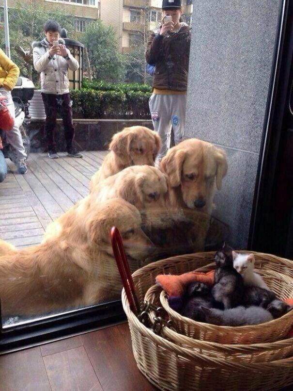 Первый раз увидели котят
