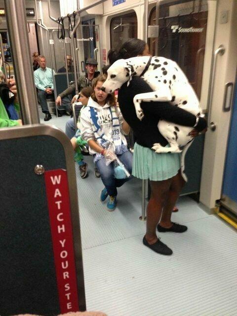 Впервые в общественном транспорте