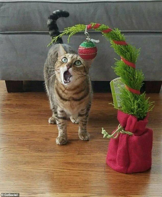 """Первое Рождество: """"Как это - не когтеточка?!"""""""