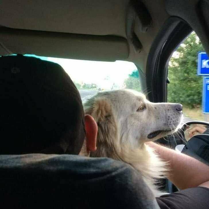 Пёс узнал своих людей, и тут не было никаких сомнений. Лео едет домой!