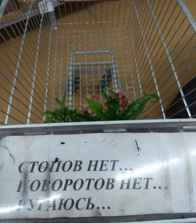 Суровая тележка в супермаркете в магазине, на витрине, прикол, смешно, супермаркет, фото