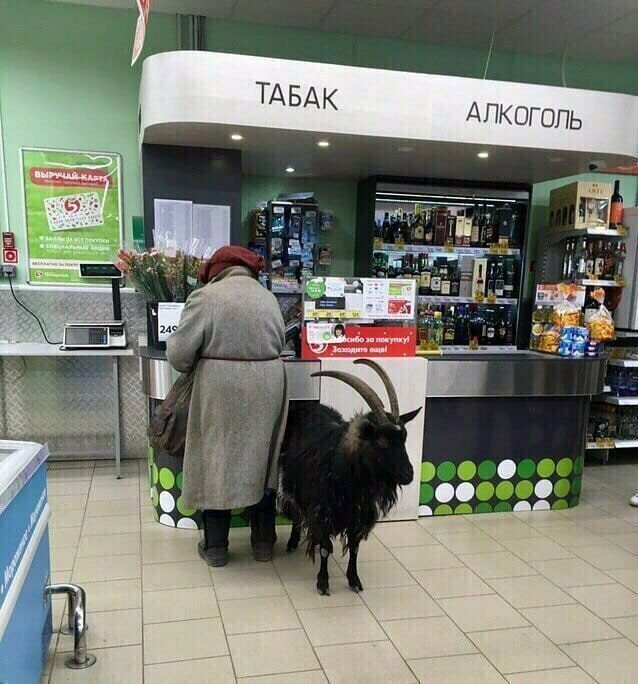 Поход в магазин чреват неожиданными встречами и уморительными ситуациями в магазине, на витрине, прикол, смешно, супермаркет, фото