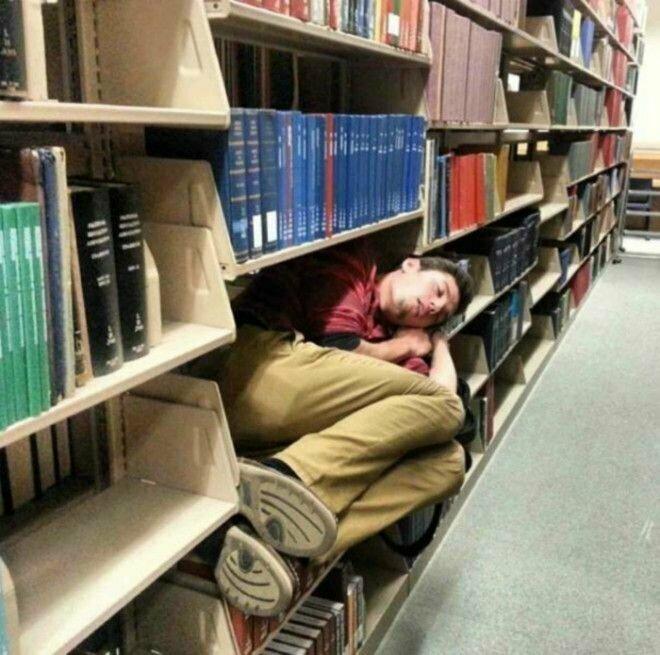 Лучше места для сна не найдёшь: тепло и тихо