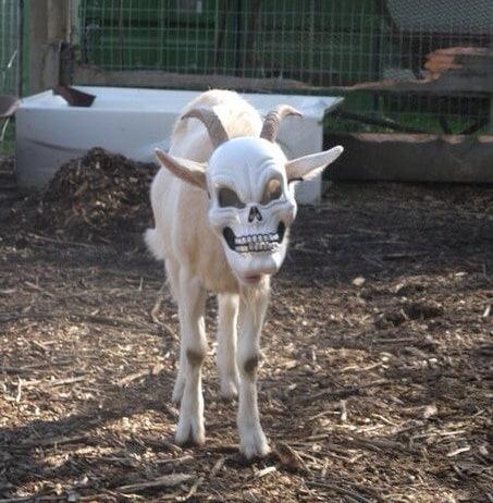 Лицо смерти животные, прикол, ситуация, смех, что тут происходит, юмор