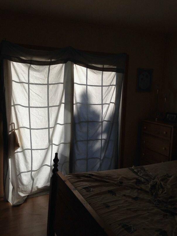 22. Та самая тень дерева вещь, восприятие, испуг, обман, оптическая иллюзия, показалось, фотомир