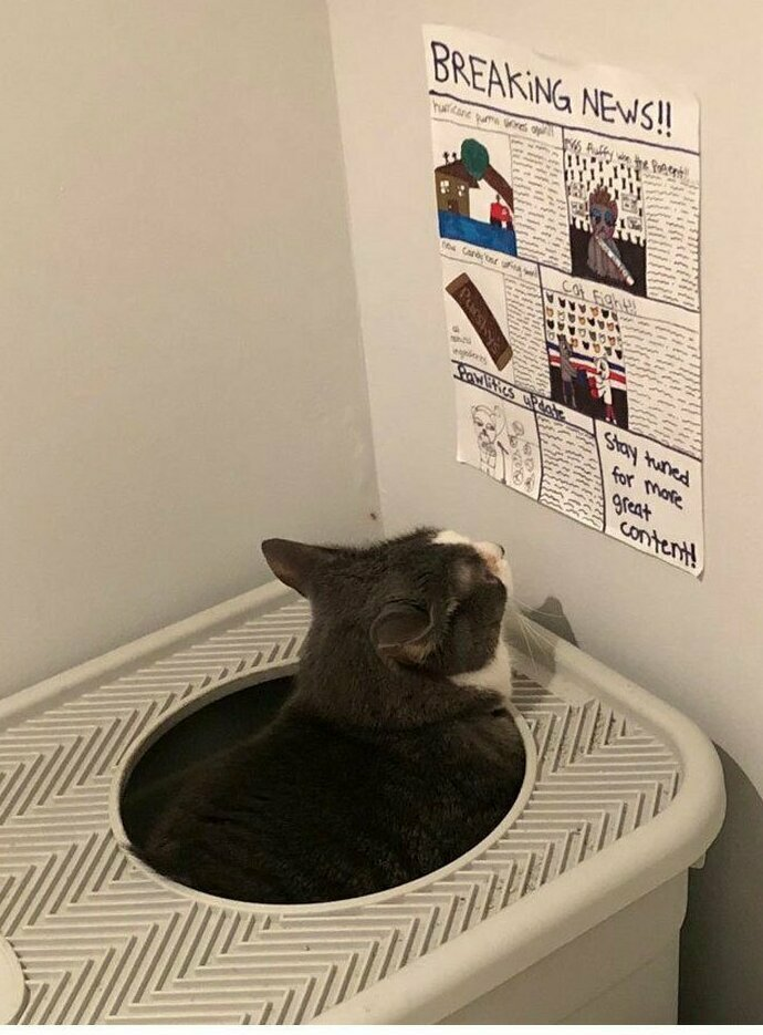 """""""Дочка моего приятеля делает специальную стенгазету для кота, чтобы тот рассматривал ее, пока сидит в лотке"""""""