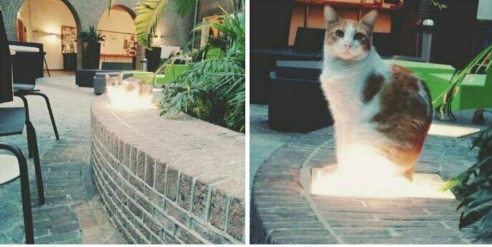 """""""Мой кот - Его Сиятельство"""""""