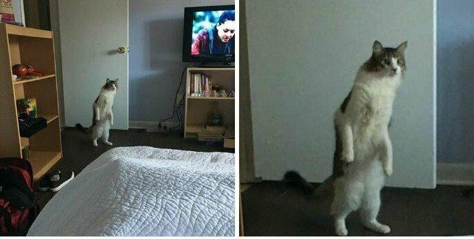 """""""Я согласилась позаботиться о кошке приятеля, пока он в отъезде. Вот так она со мной знакомилась"""""""