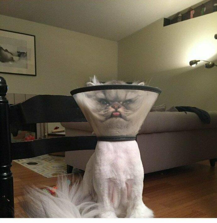 """""""Наш кот только что вернулся от ветеринара. Он очень недоволен"""""""