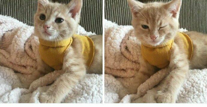 """""""Я купила своему коту свитер, чтобы он не мерз, и теперь он, похоже, считает себя модным парнем!"""""""
