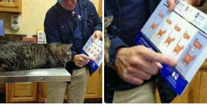 """""""Вот так ветеринар объяснял кошке, что она слишком толстая"""""""