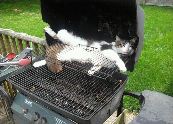 Кошка-гриль
