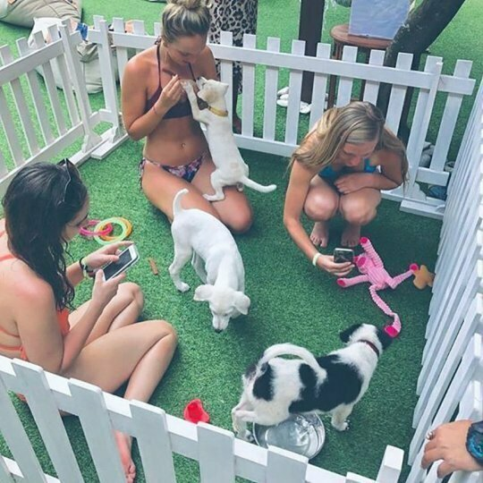 Уникальная щенячья терапия всем посетителям отеля на Бали